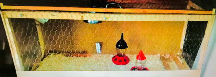 Brooder Box with Supplies