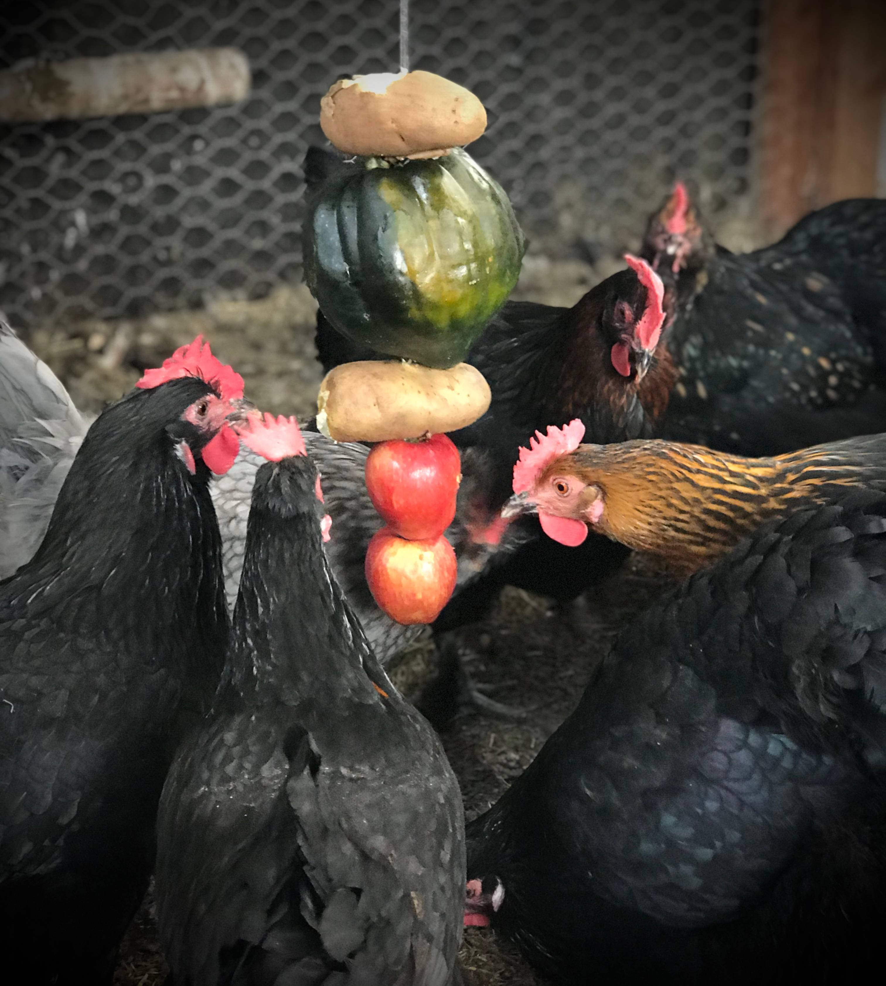 Skewer of Fruits and Vegetables for Chicken Entertainment