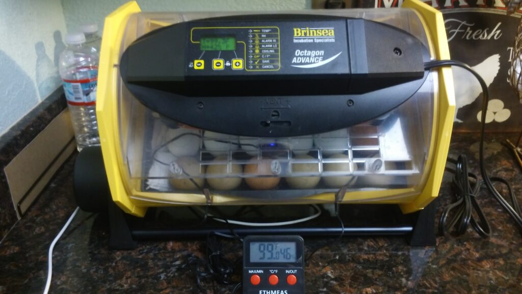 Test your incubator with a hygrometer to make sure the incubator is calibrated.