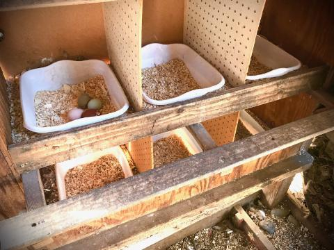SPRINKLE SOME HERBS IN THE NESTING BOXES