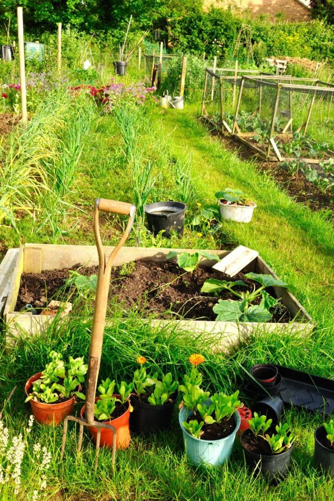 (learn how to make garden soil out of chicken manure) TIME TO ADD THE COMPOST TO YOUR GARDEN!