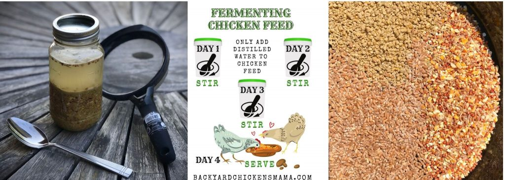 HOW TO FERMENT CHICKEN FEED