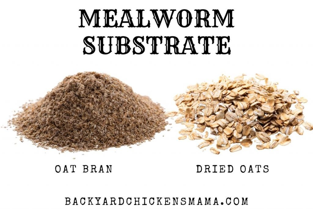 MEALWORM SUBSTRATE
