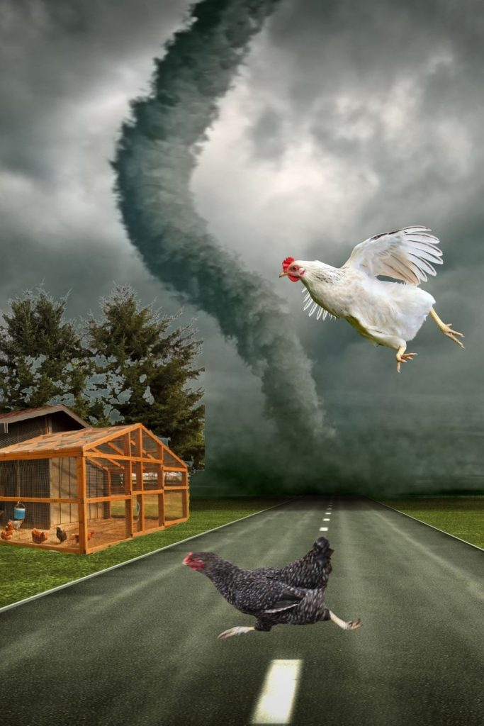 WILL YOUR CHICKENS BE SAFE DURING A DISASTER?