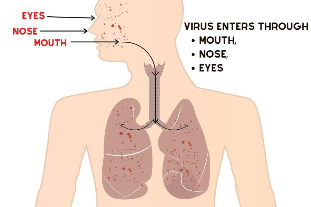 MANY CHICKEN VIRUSES ENTER THROUGH YOUR EYES, NOSE AND MOUTH.