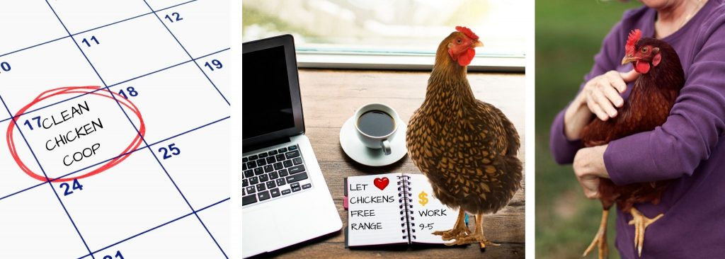CAN I WORK AND OWN CHICKENS?