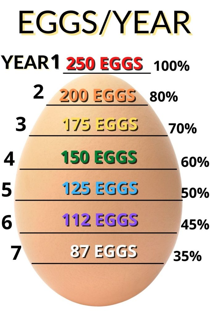 Chart: how many eggs per year a chicken lays. Do you know what to do when your chicken dies?