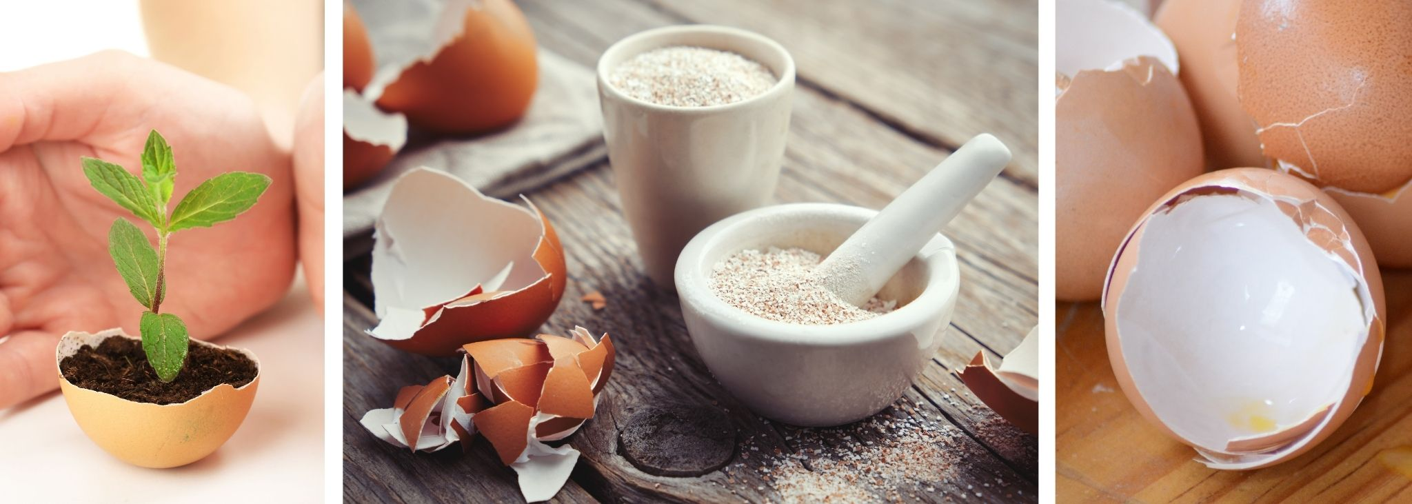 WHY YOU SHOULDN'T BE THROWING EGGSHELLS AWAY